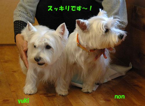 DSC_0106_20101123000608.jpg