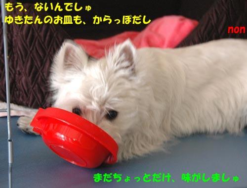 DSC_0111_20100513154608.jpg