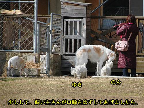 DSC_0119_20110210194703.jpg