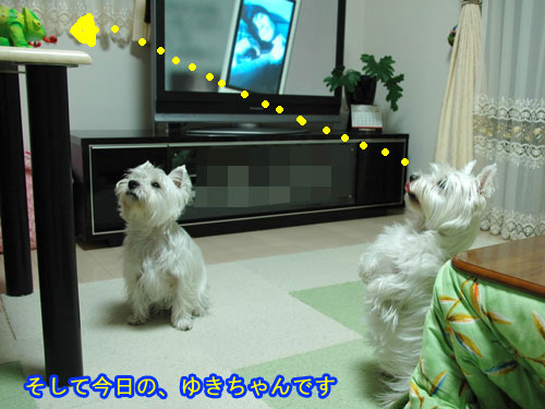 DSC_0123_20110207224750.jpg