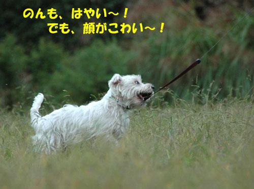 DSC_0124_20101027215704.jpg