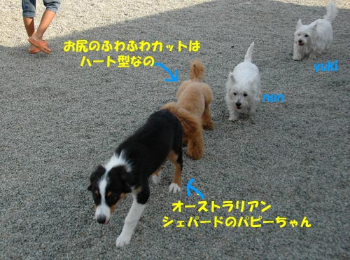 DSC_0125_20100928212025.jpg