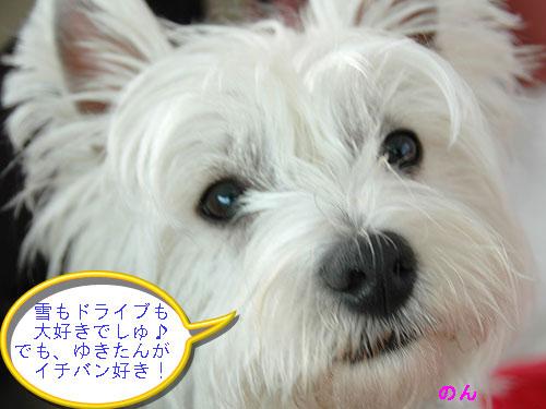 DSC_0129_20110107182533.jpg