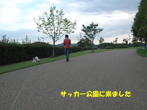 DSC_0143_20101003112443.jpg