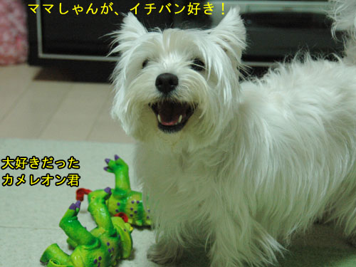 DSC_0148_20110207224749.jpg