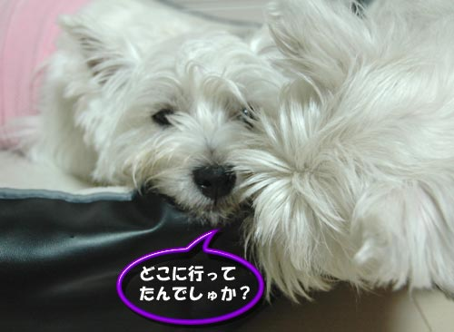 DSC_0180_20100703103502.jpg