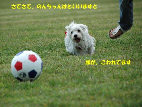 DSC_0182_20101003112600.jpg