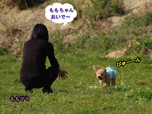 DSC_0184_20110512165323.jpg