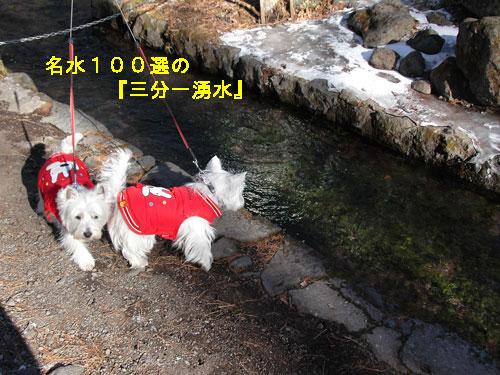 DSC_0194_20110106183341.jpg
