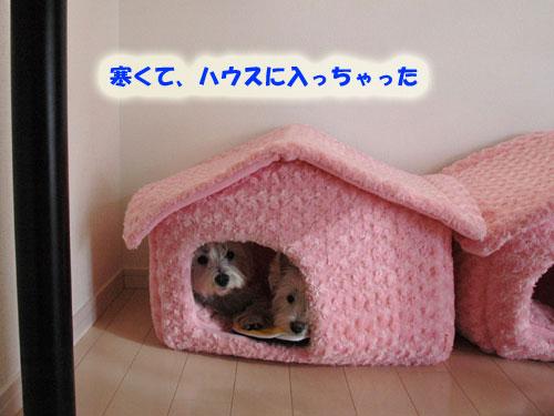 DSC_0195_20101216223902.jpg