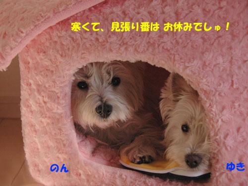 DSC_0197_20101216223902.jpg