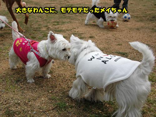 DSC_0205_20110403230620.jpg