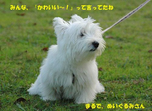 DSC_0207_20101123140352.jpg