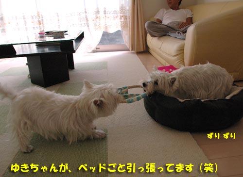 DSC_0209_20100905171118.jpg