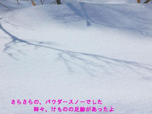 DSC_0210s.jpg