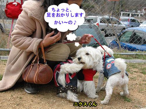 DSC_0211_20110407212804.jpg