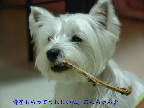 DSC_0215_20110108174518.jpg