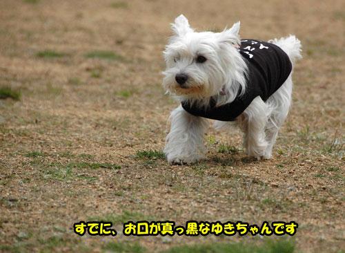 DSC_0216_20110403230619.jpg
