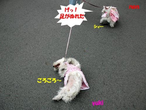 DSC_0218_20100607191957.jpg
