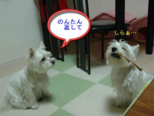DSC_0218_20110108174517.jpg