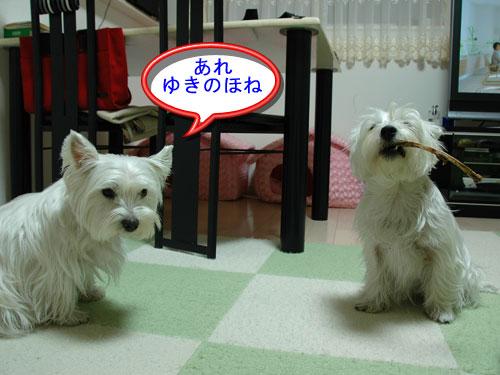 DSC_0226_20110108174517.jpg