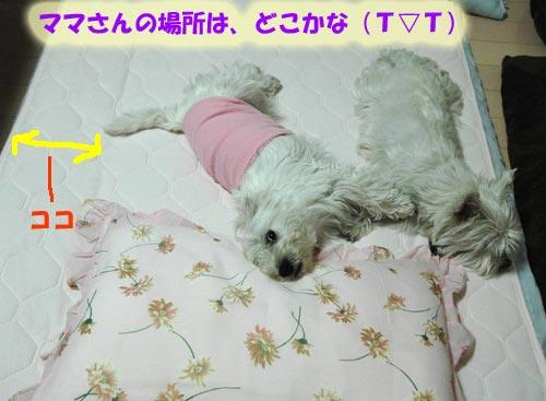 DSC_0237_20100703103521.jpg