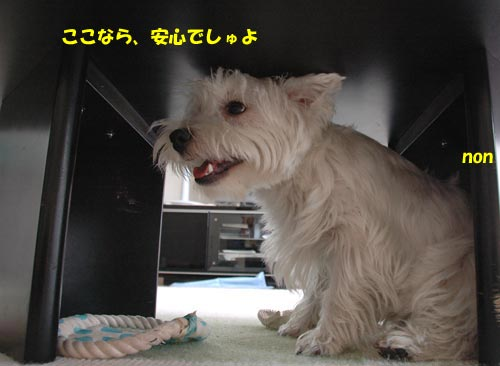 DSC_0241_20100905171214.jpg