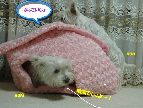 DSC_0241_20101113173310.jpg
