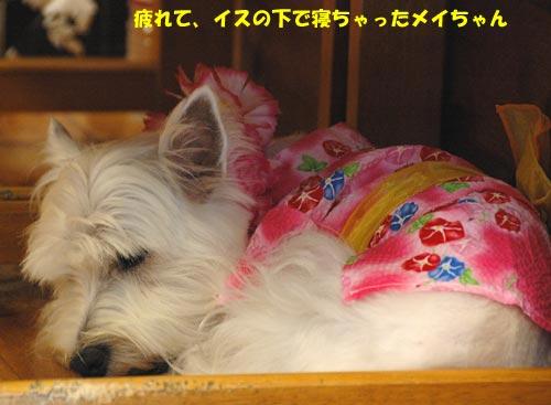 DSC_0244_20100803192405.jpg