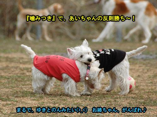 DSC_0245_20110405184702.jpg