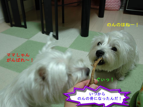 DSC_0246_20110108174543.jpg