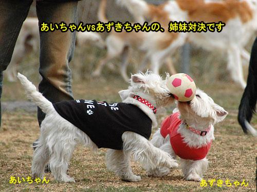 DSC_0248_20110405184702.jpg