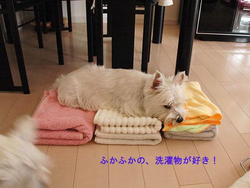 DSC_0257_20110207224456.jpg