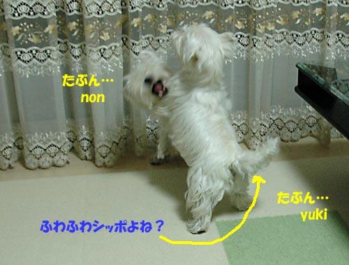 DSC_0265_20100823223838.jpg