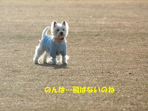 DSC_0266_20101212222229.jpg