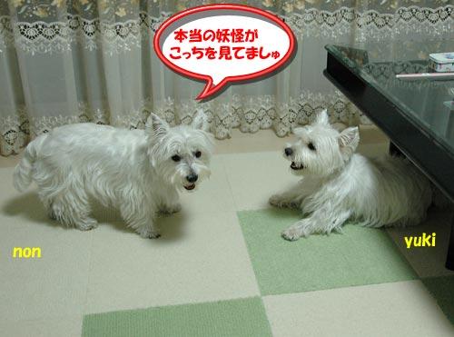 DSC_0269_20100823223850.jpg