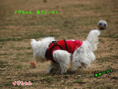 DSC_0273_20110407213030.jpg