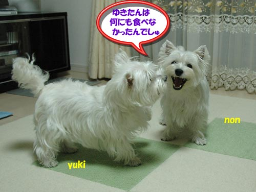 DSC_0275_20100823223839.jpg