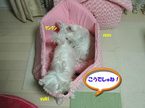 DSC_0276_20101113173337.jpg