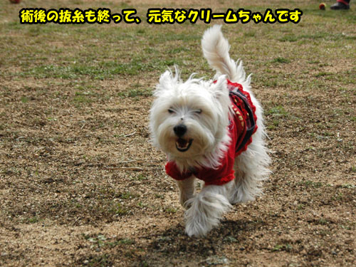 DSC_0291_20110403232132.jpg