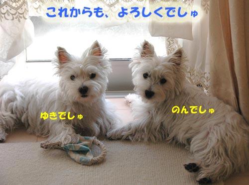 DSC_0293_20100906172752.jpg