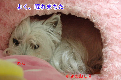 DSC_0294_20110117211913.jpg