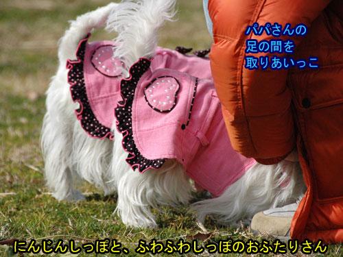 DSC_0294_20110223205955.jpg
