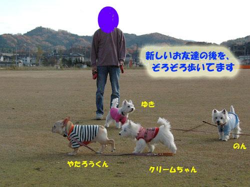 DSC_0327_20101217180735.jpg