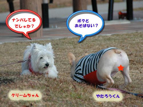 DSC_0342_20101217180734.jpg