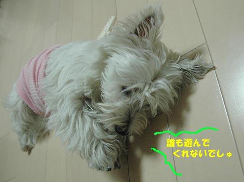DSC_0345_20100710001529.jpg