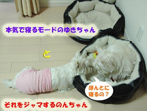 DSC_0358_20100710001559.jpg