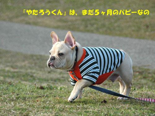 DSC_0365_20101217180734.jpg