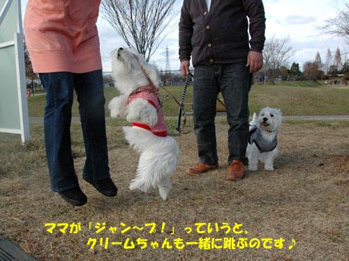DSC_0367_20101212222228.jpg