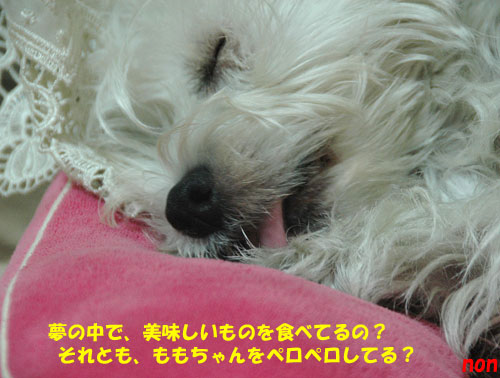 DSC_0370_20101104155550.jpg